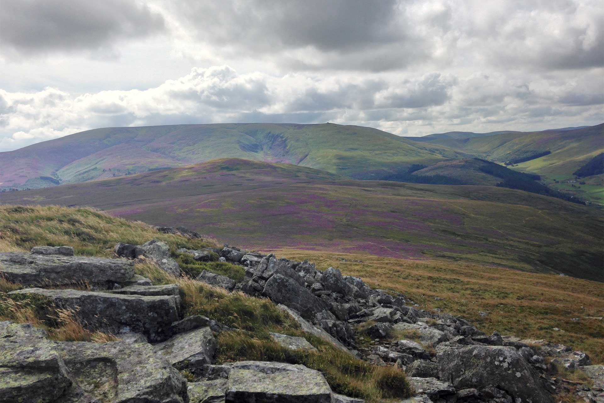 The Cheviot from Hare Law