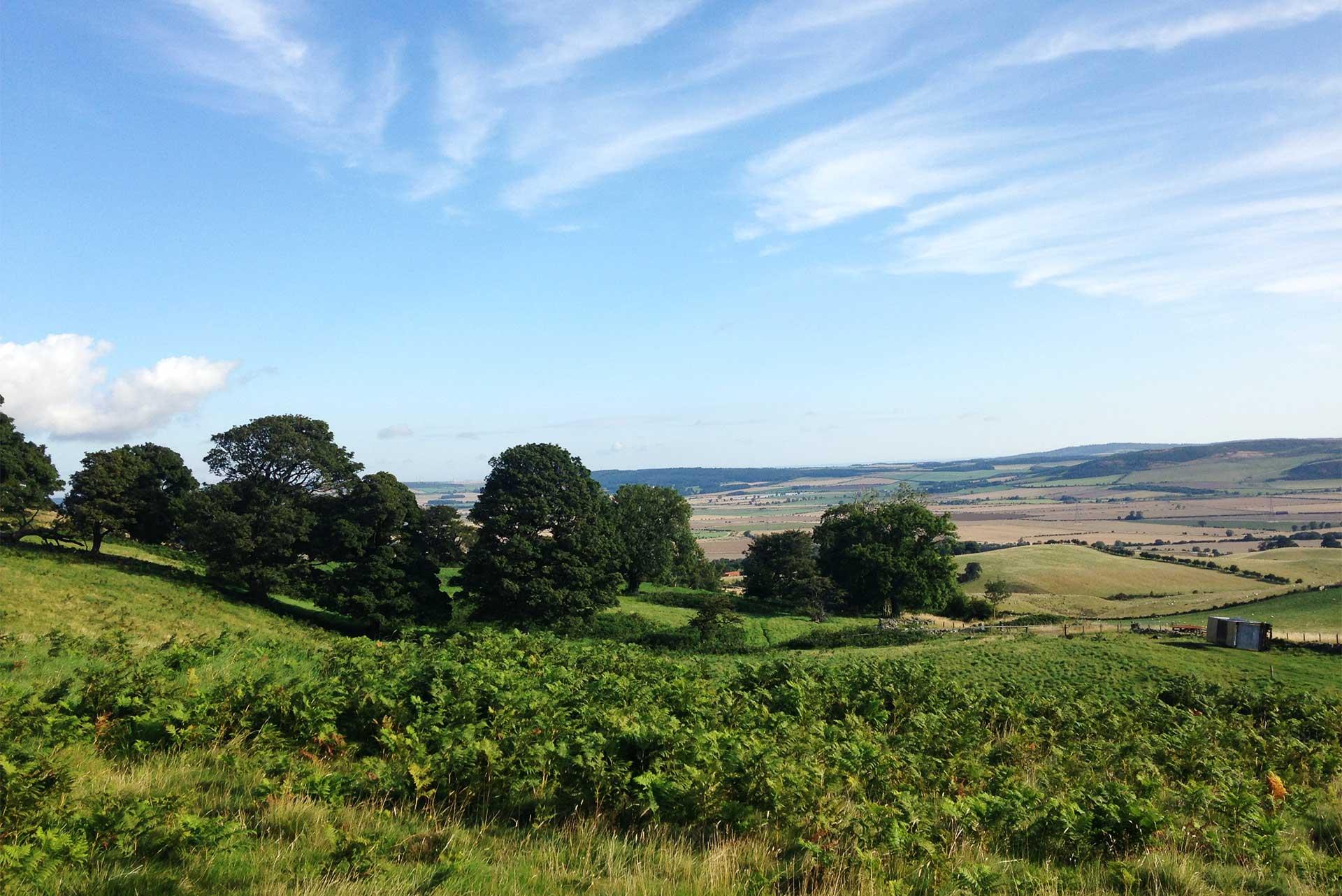 Coldberry Hill towards Homildon Cottage