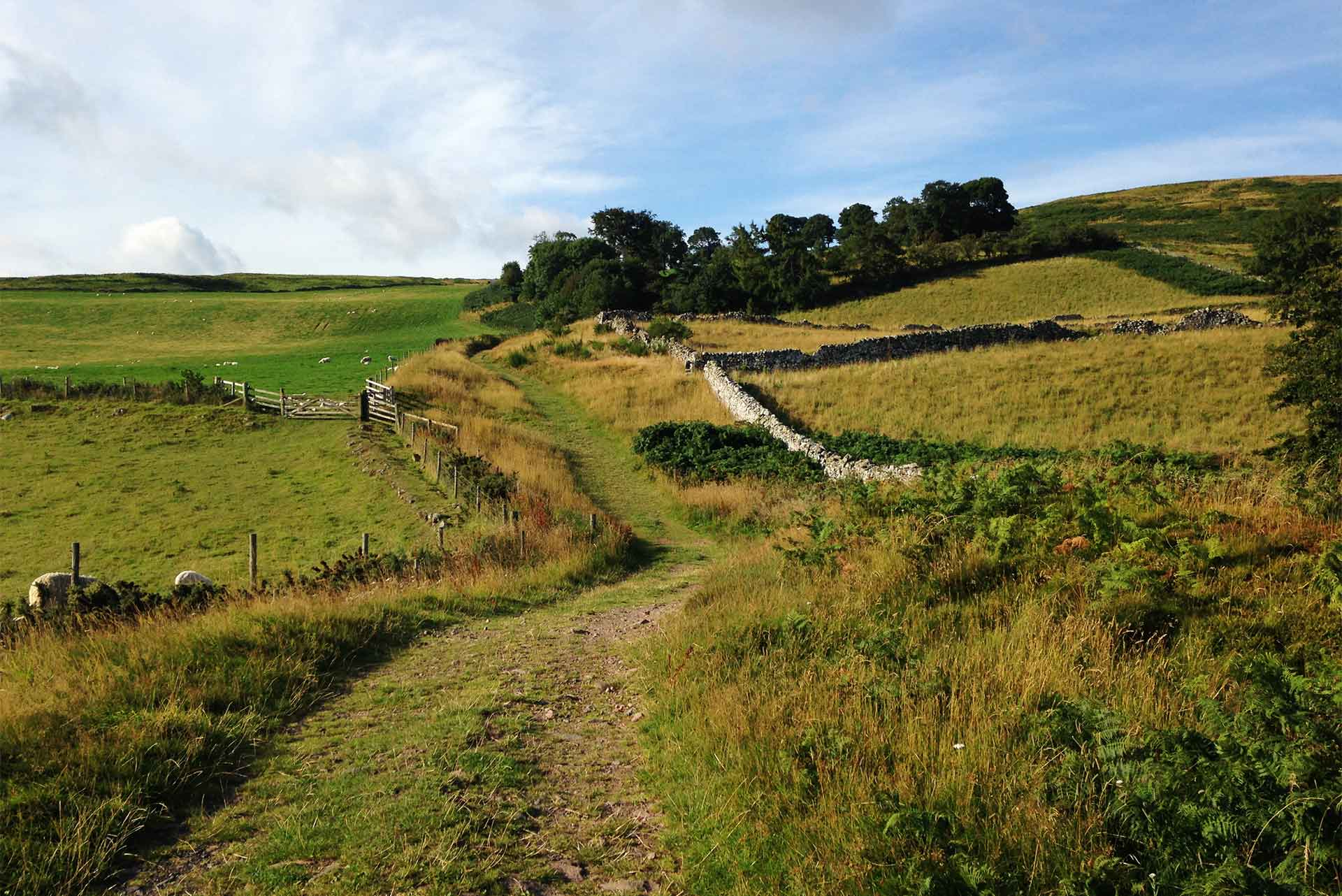 Path from Homildon Cottage