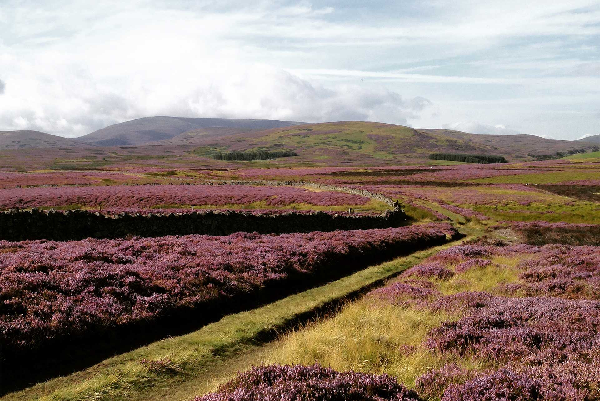 St Cuthbert's Way – Gains Law
