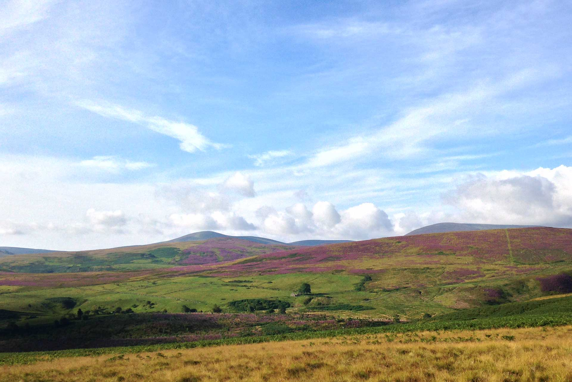 St Cuthberts Way – view towards Cold Law