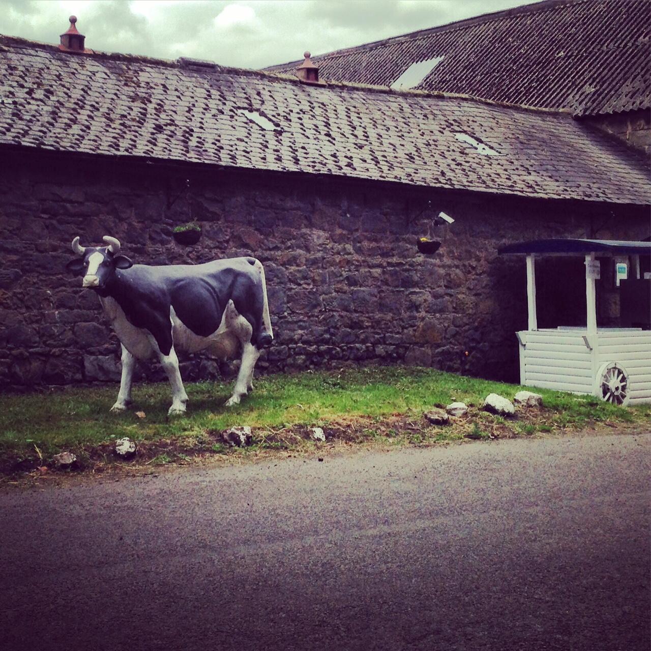 Doddington Dairy stall